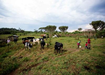 Milkman Farmers